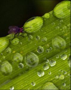 rainy plants and web 026 ed  com