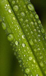 rainy plants and web 049 ed  com