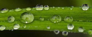 rainy plants and web 050 ed  com