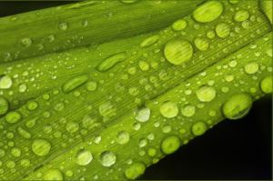 rainy plants and web 067 ed 2  com