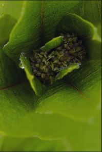 rainy plants and web 071 ed  com