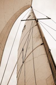 Sails are Up!